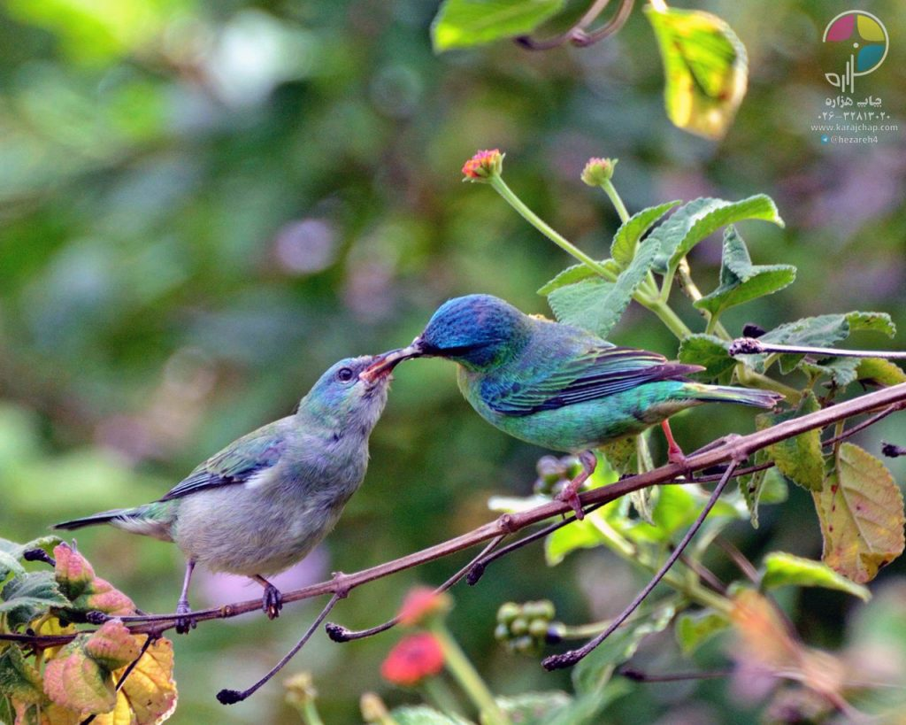 brazilian-wild-birds-feeding-animals-wildlife-tree-branch-foliage-nature-1280x1024